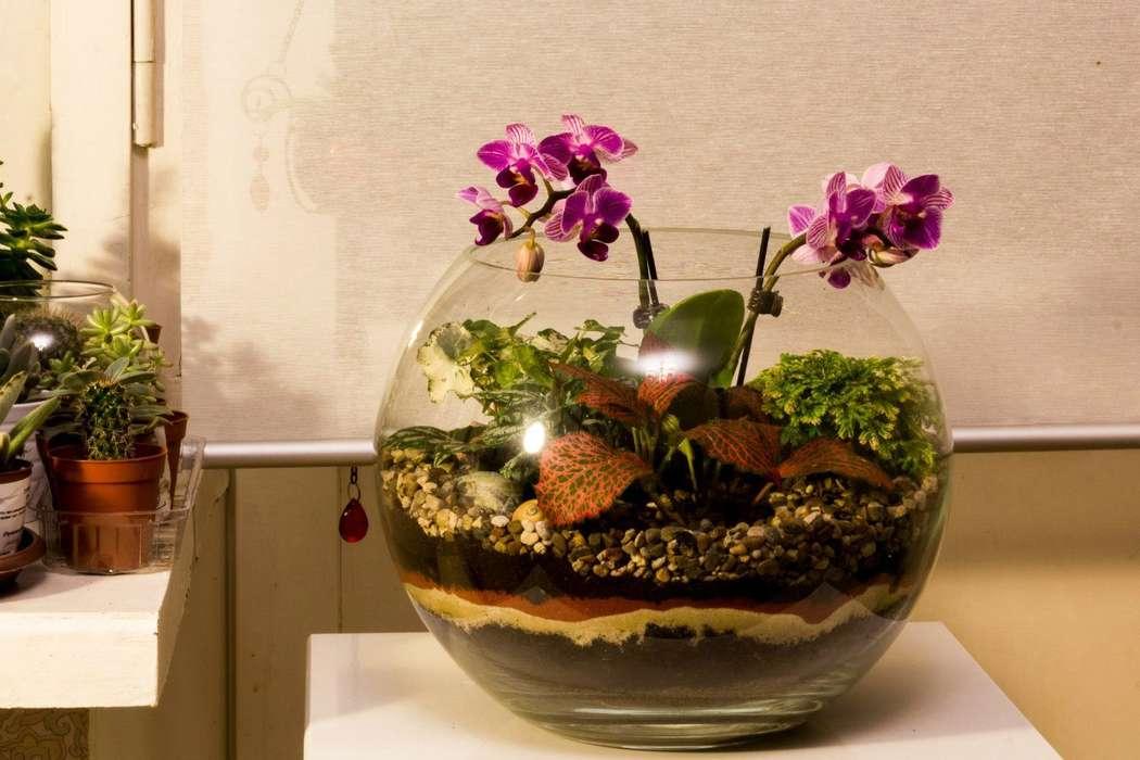 Шар 25 см «Тропический лес» с мини-орхидеями (ваза 7,5 л, ⌀25 см)   #30 - фото 9627918 Мастерская флорариумов Юлии Шумилкиной
