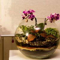 Шар 25 см «Тропический лес» с мини-орхидеями (ваза 7,5 л, ⌀25 см)   #30