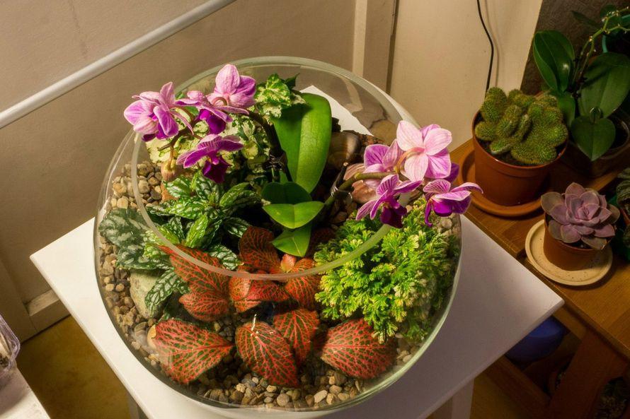 Шар 25 см «Тропический лес» с орхидеями (ваза 7,5 л, ⌀25 см)   #30 - фото 9627920 Мастерская флорариумов Юлии Шумилкиной