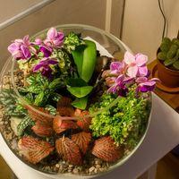Шар 25 см «Тропический лес» с орхидеями (ваза 7,5 л, ⌀25 см)   #30
