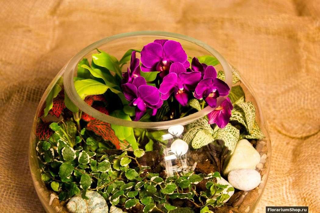 Шар 25 см «Тропический лес» с мини-орхидеями (ваза 7,5 л, ⌀25 см)   #31 - фото 9627922 Мастерская флорариумов Юлии Шумилкиной