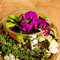 Шар 25 см «Тропический лес» с мини-орхидеями (ваза 7,5 л, ⌀25 см)   #31