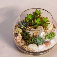 Флорариум Шар 22 см «Море» с суккулентами (ваза 4 л, ⌀22 см)   #33