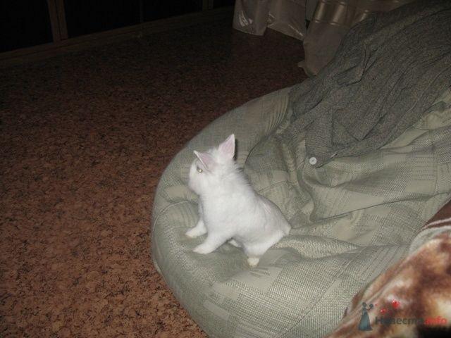 Лордюша смотрит телевизор - фото 79368 Ксюньчик