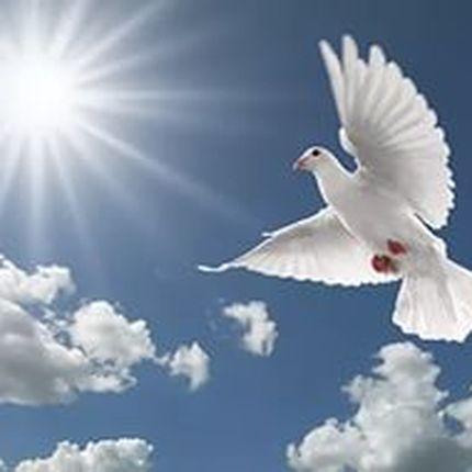 """Порода голубей """"Благодарненские бойные голуби"""""""