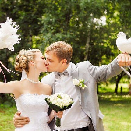 Пара голубей для свадебной фотосессии