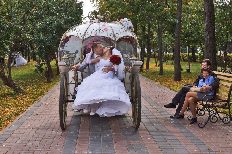 Фото 10763944 в коллекции Фото,Видео.. - Фото, Видеосъёмка Сергей Романов