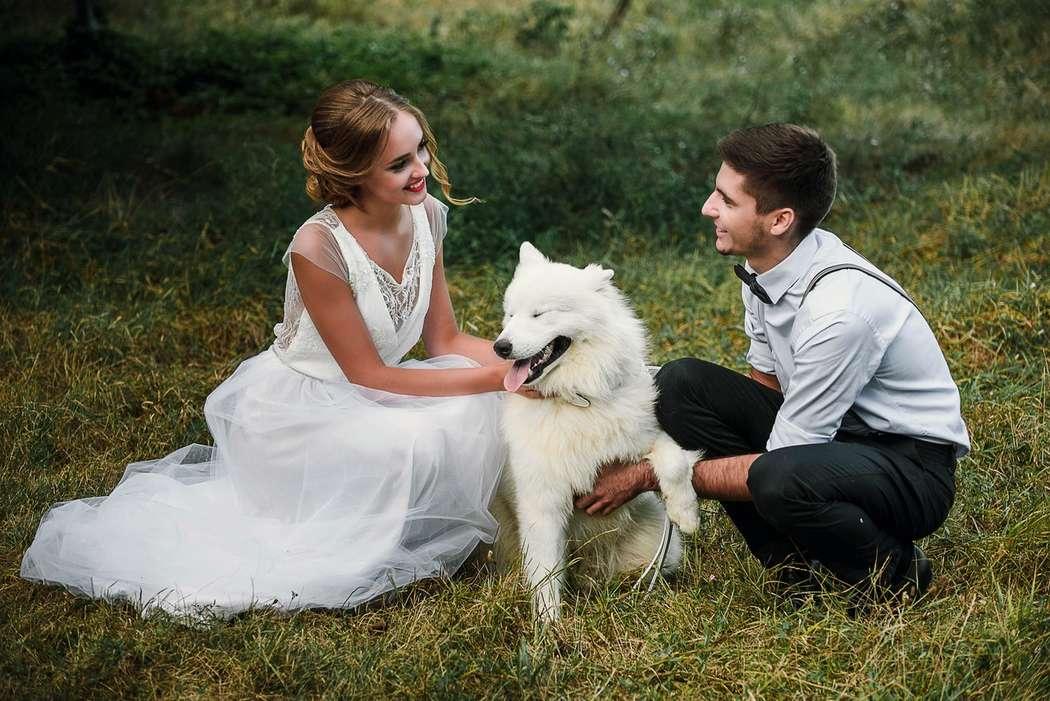 """Нестандартные свадебные фотосессии с животными!!!! - фото 11973864 """"Сто зверей"""" - агентство дрессированных животных"""