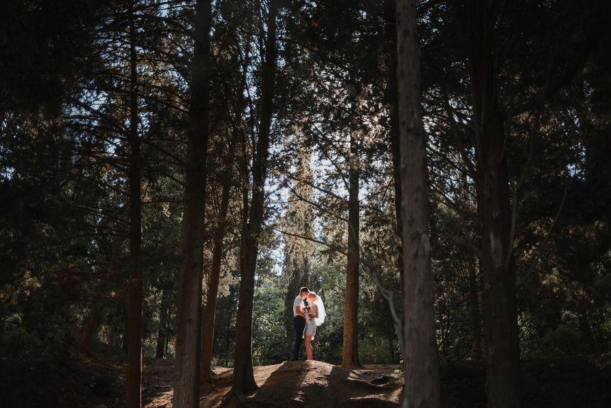 Фото 13536510 в коллекции Свадебная фотосессия - Фотограф Возняк Максим