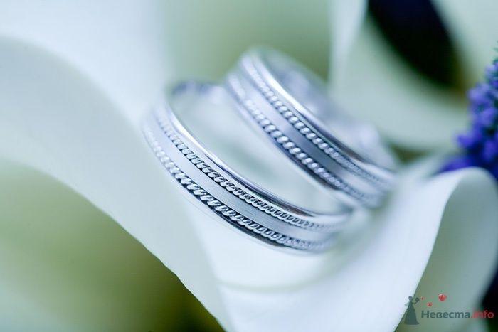 Обручальные кольца из белого золота с ободком на белом фоне.