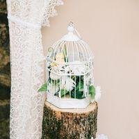 Свадьба в сердце леса. Выездная регистрация.
