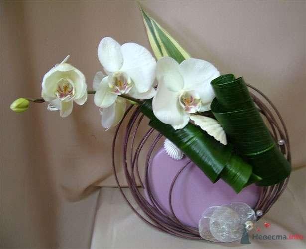 Фото 51870 в коллекции Цвяточки!  - Вашкетова Юлия - организатор свадеб, флорист.