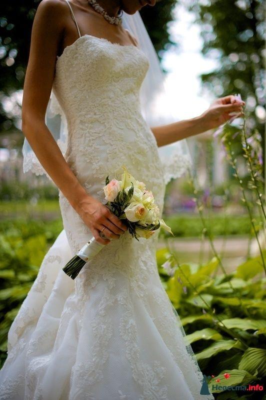 Фото 123744 в коллекции Свадебные фотографии - Геннадий Котельников - видео и фотоуслуги