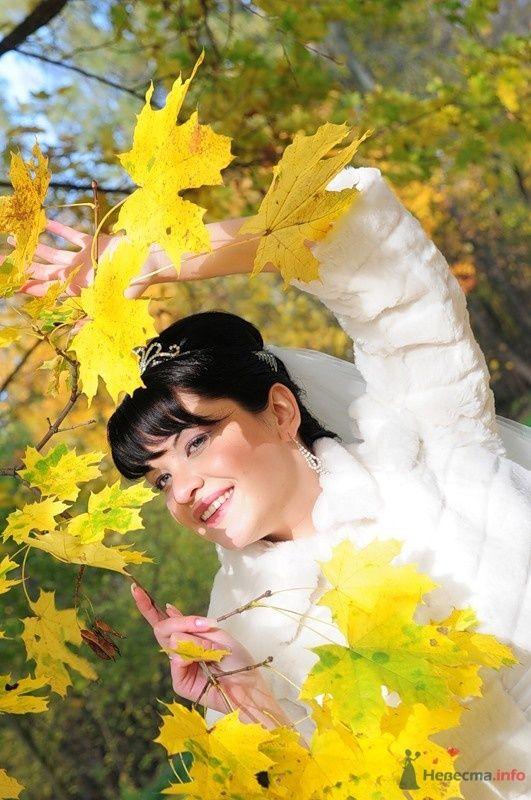 Фото 48227 в коллекции Мои фотографии - Евгения2009