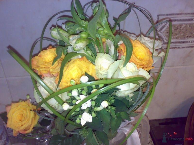 Фото 43053 в коллекции Про цветы - Jabberwokky