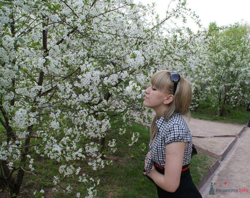 Фото 65532 в коллекции Мои фотографии - коshечка