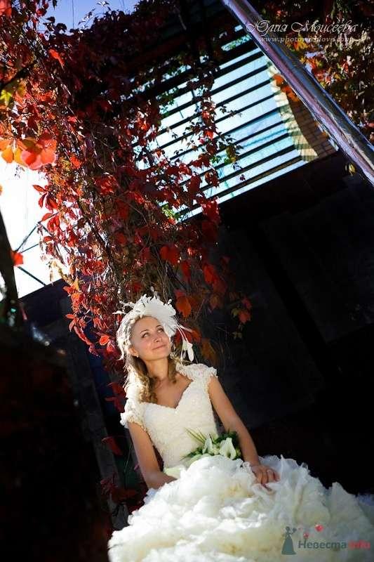 Моисеева Юлия - фото 62548 Свадебный фотограф Моисеева Юлия