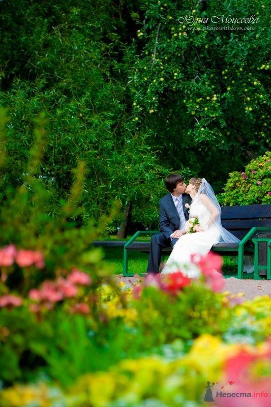 Фото 62616 в коллекции Мои фотографии - Свадебный фотограф Моисеева Юлия