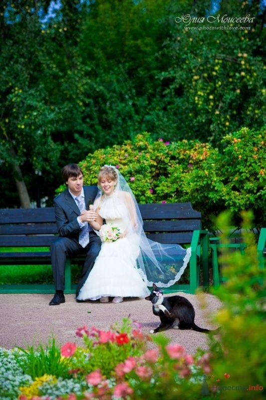 Фото 62617 в коллекции Мои фотографии - Свадебный фотограф Моисеева Юлия