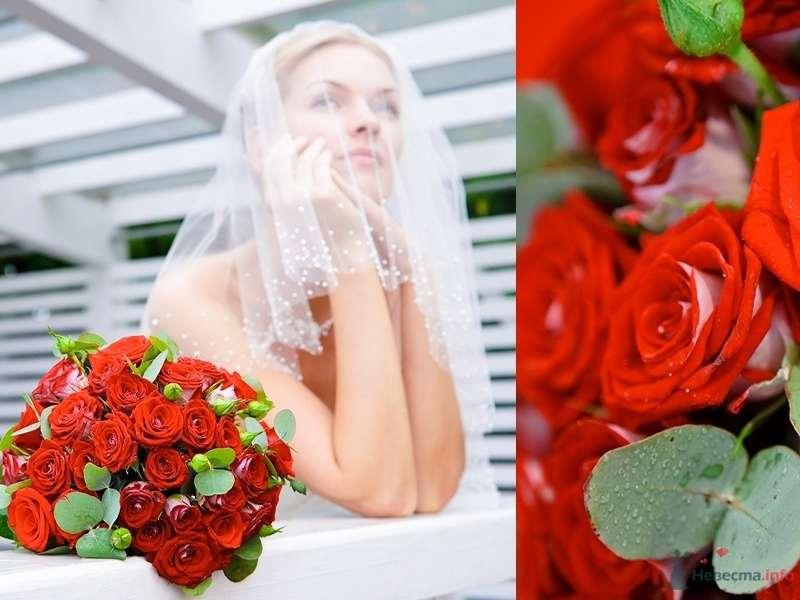 Фото 66607 в коллекции Мои фотографии - Свадебный фотограф Моисеева Юлия