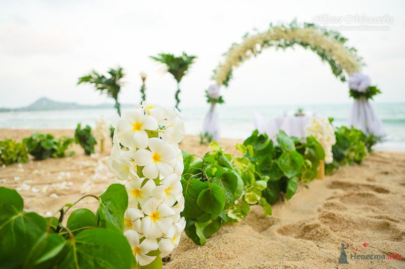 арка свадьба - фото 80356 Свадебный фотограф Моисеева Юлия