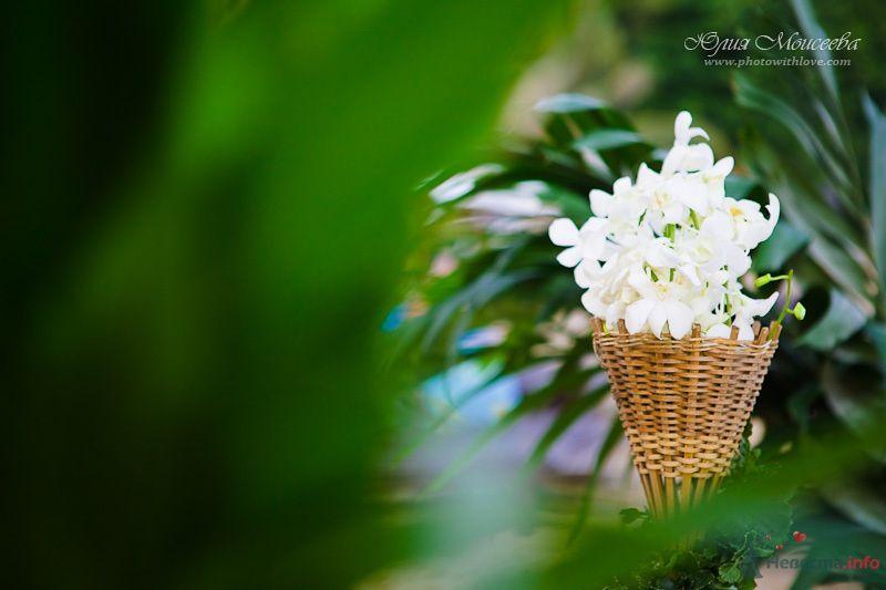 Фото 80413 в коллекции Мои фотографии - Свадебный фотограф Моисеева Юлия