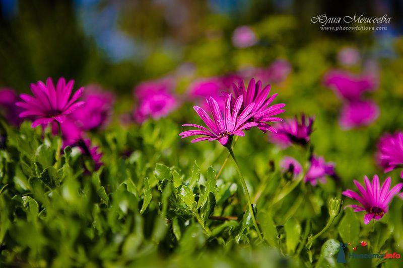 красивые цветы - фото 95799 Свадебный фотограф Моисеева Юлия
