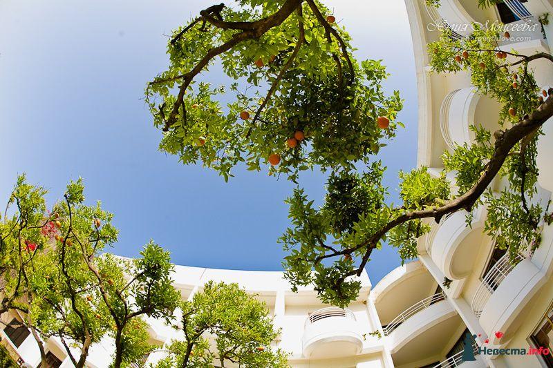 Мандариновое дерево - фото 95803 Свадебный фотограф Моисеева Юлия