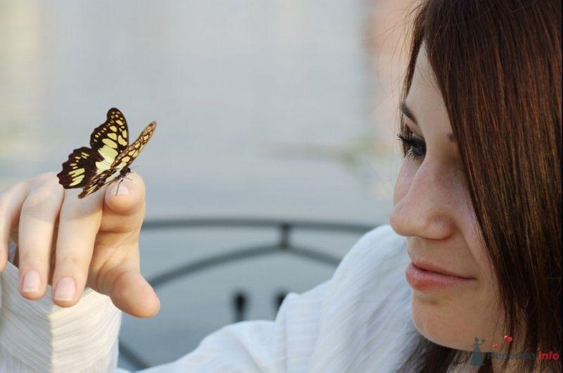 Я и бабочки - фото 40093 sky.plane.gir