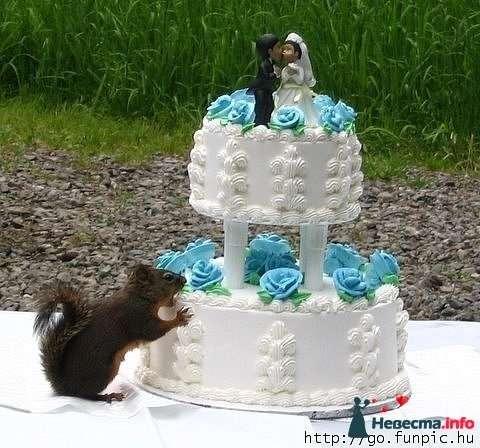 Фото 93427 в коллекции Мы тоже были невестами! - Ведущая Власова Дарья