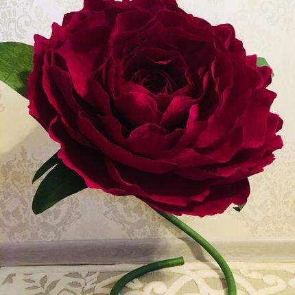 Ростовые цветы для оформления