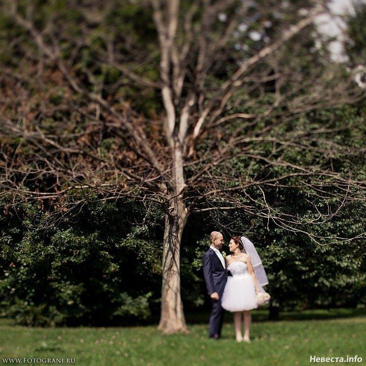 Фото 630819 в коллекции Denismus - Конкурс фото «Свадьба моей мечты» - Nevesta.info - модератор