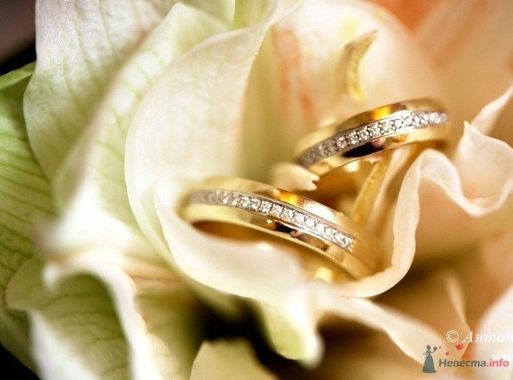 Обручальные кольца с драгоценными камнями на фоне нежного  цветка. - фото 76507 КатеринаВладимир