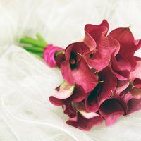 букет невесты из бордовых калл