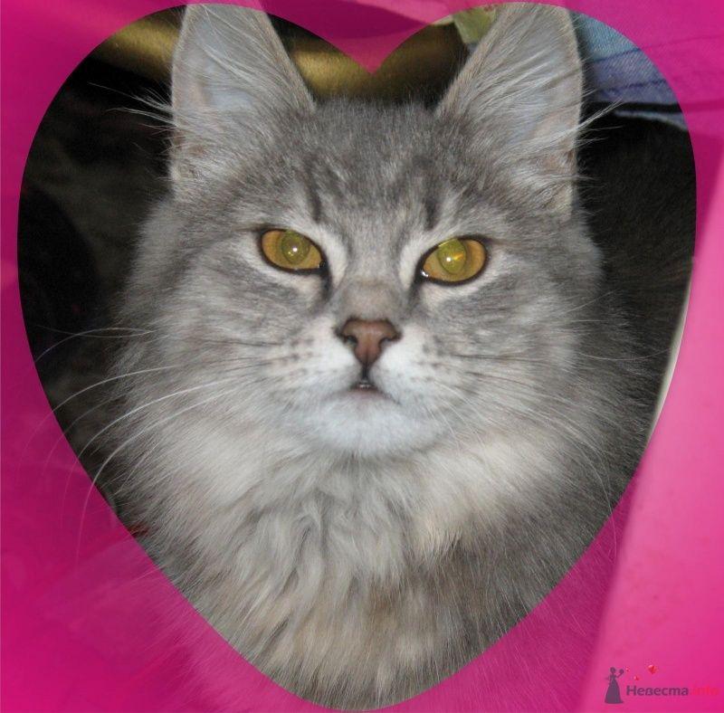 моя кошенька - фото 46915 Verusik