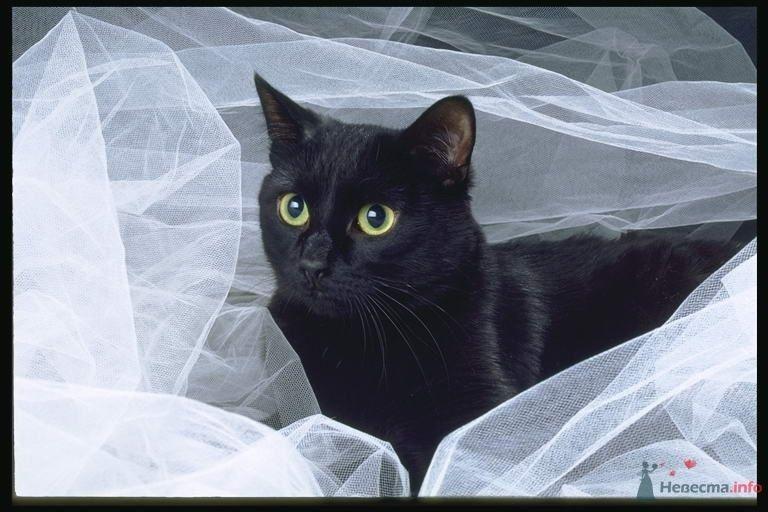 Невеста 28.08.2010г. - фото 48513 MARGAI
