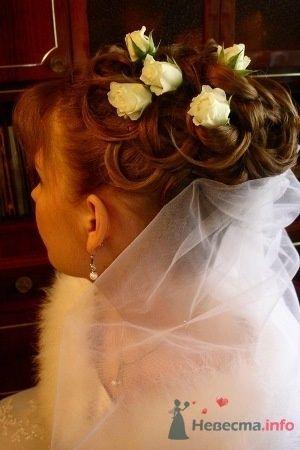 Фото 56021 в коллекции мои фотографии - Свадебный распорядитель Ольга Фокс