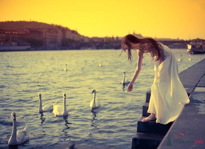 Невеста в белом длинном платье наклонилась над озером с утками