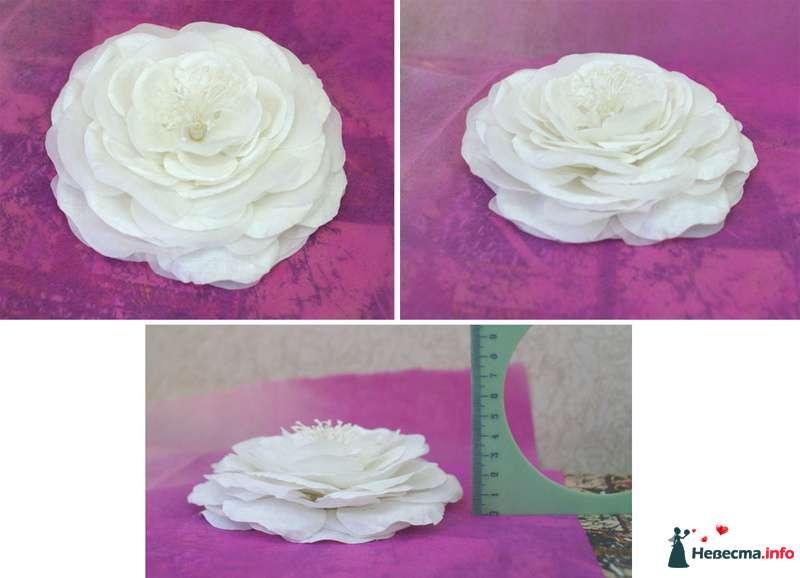 Цветок Веры Быковой - фото 113989 Bellapupa