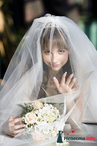 Фото 110929 в коллекции Wedding - Oktava