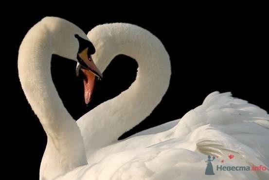 Фото 67013 в коллекции Птицы - вечные невесты - Incognito