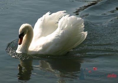 Фото 67014 в коллекции Птицы - вечные невесты - Incognito