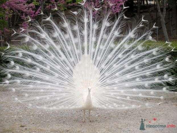 Фото 69477 в коллекции Птицы - вечные невесты - Incognito
