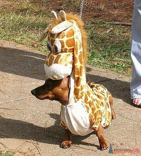 А я жираф :) - фото 75136 Incognito