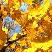 Осень, сентябрь_3