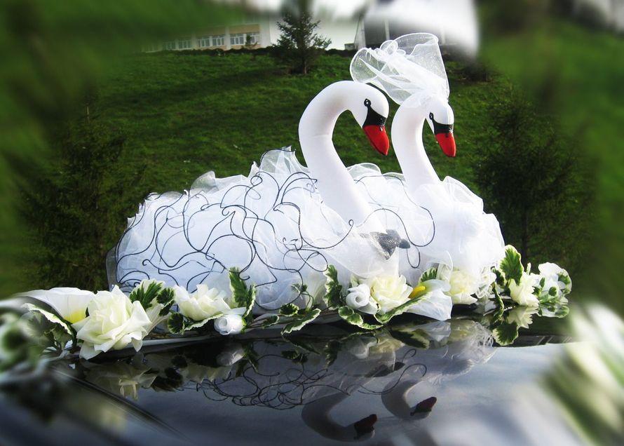 Открытка лебеди свадьба, карпаты природа христианская