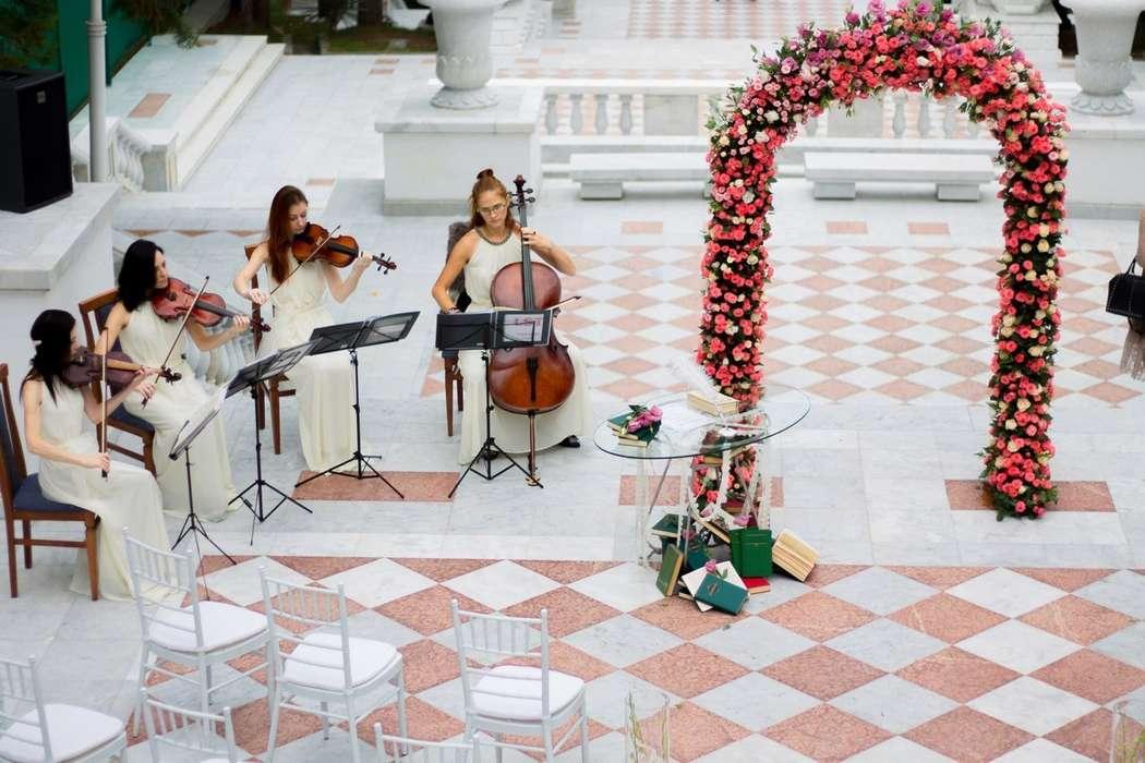 Фото 18574096 в коллекции Акустическая скрипка - Скрипачка KasandRA