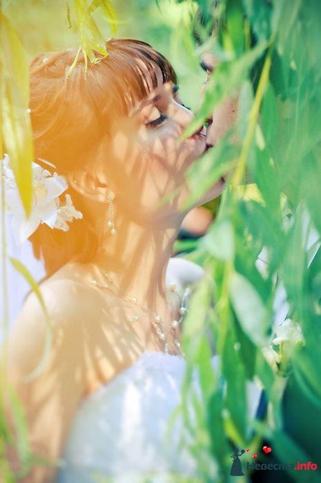 Фото 102580 - Невеста01