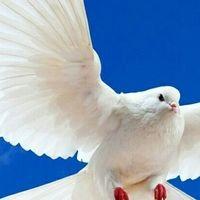 Sv-golubi - голуби на свадьбу