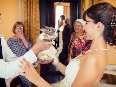 Свадебное слайдшоу Зина+Саша